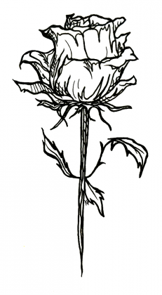 Rose Sticker Design
